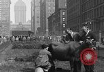 Image of milking a cow New York United States USA, 1929, second 4 stock footage video 65675050358