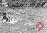 Image of fish catching dog Washington State United States USA, 1929, second 5 stock footage video 65675050359