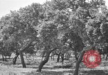 Image of Cork Oak trees Granada Spain, 1926, second 10 stock footage video 65675050509
