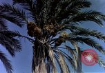 Image of Algeria after independence Algeria, 1963, second 11 stock footage video 65675050584