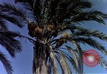 Image of Algeria after independence Algeria, 1963, second 12 stock footage video 65675050584
