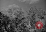 Image of forest Caracas Venezuela, 1940, second 9 stock footage video 65675050630