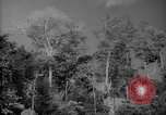 Image of forest Caracas Venezuela, 1940, second 10 stock footage video 65675050630