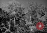 Image of forest Caracas Venezuela, 1940, second 11 stock footage video 65675050630