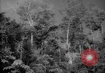 Image of forest Caracas Venezuela, 1940, second 12 stock footage video 65675050630