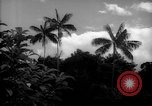 Image of forest Caracas Venezuela, 1940, second 5 stock footage video 65675050633