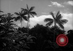Image of forest Caracas Venezuela, 1940, second 9 stock footage video 65675050633