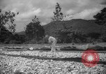 Image of shelling and drying of coconut Caracas Venezuela, 1940, second 7 stock footage video 65675050637