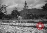Image of shelling and drying of coconut Caracas Venezuela, 1940, second 8 stock footage video 65675050637