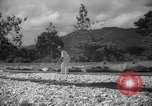 Image of shelling and drying of coconut Caracas Venezuela, 1940, second 9 stock footage video 65675050637