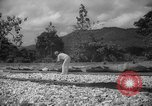 Image of shelling and drying of coconut Caracas Venezuela, 1940, second 12 stock footage video 65675050637