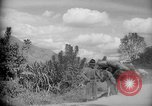 Image of mules Caracas Venezuela, 1940, second 2 stock footage video 65675050642