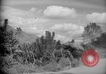 Image of mules Caracas Venezuela, 1940, second 3 stock footage video 65675050642