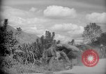 Image of mules Caracas Venezuela, 1940, second 4 stock footage video 65675050642