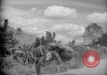 Image of mules Caracas Venezuela, 1940, second 5 stock footage video 65675050642