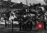 Image of camouflaged net United States USA, 1941, second 1 stock footage video 65675050731