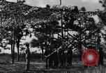 Image of camouflaged net United States USA, 1941, second 4 stock footage video 65675050731