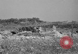 Image of 55th Brigade AAA 90 mm gun under camouflage netting Hammond Louisiana USA, 1943, second 5 stock footage video 65675050732