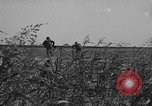 Image of Troops of 55th Brigade AAA train in ground defense tactics Hammond Louisiana USA, 1943, second 10 stock footage video 65675050738