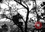 Image of camouflage United States USA, 1942, second 1 stock footage video 65675050740