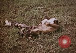 Image of atrocity victims Tinian Island Mariana Islands, 1944, second 2 stock footage video 65675050864