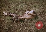 Image of atrocity victims Tinian Island Mariana Islands, 1944, second 3 stock footage video 65675050864
