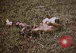 Image of atrocity victims Tinian Island Mariana Islands, 1944, second 4 stock footage video 65675050864