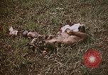 Image of atrocity victims Tinian Island Mariana Islands, 1944, second 5 stock footage video 65675050864