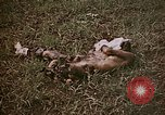 Image of atrocity victims Tinian Island Mariana Islands, 1944, second 6 stock footage video 65675050864