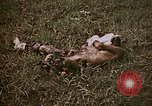 Image of atrocity victims Tinian Island Mariana Islands, 1944, second 7 stock footage video 65675050864