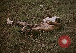 Image of atrocity victims Tinian Island Mariana Islands, 1944, second 8 stock footage video 65675050864