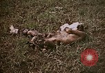 Image of atrocity victims Tinian Island Mariana Islands, 1944, second 9 stock footage video 65675050864