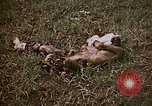 Image of atrocity victims Tinian Island Mariana Islands, 1944, second 10 stock footage video 65675050864