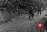 Image of war dogs Man-Tha Burma, 1944, second 10 stock footage video 65675050914