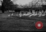 Image of baby animals Germany, 1960, second 4 stock footage video 65675051183