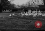 Image of baby animals Germany, 1960, second 5 stock footage video 65675051183