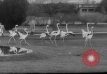 Image of baby animals Germany, 1960, second 6 stock footage video 65675051183