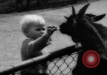 Image of baby animals Germany, 1960, second 12 stock footage video 65675051183