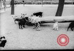 Image of baby animals Europe, 1960, second 4 stock footage video 65675051193
