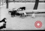 Image of baby animals Europe, 1960, second 5 stock footage video 65675051193