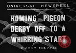 Image of homing pigeons Selby England, 1936, second 4 stock footage video 65675051381