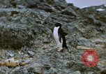 Image of South Pole expedition South Pole, 1939, second 5 stock footage video 65675051520