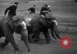 Image of elephant race Columbus Ohio USA, 1935, second 10 stock footage video 65675051628