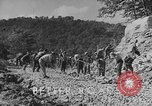 Image of WPA Conservation projects in West Virginia West Virginia USA, 1937, second 2 stock footage video 65675051767
