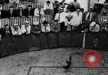 Image of cockfighting Guaynabo Puerto Rico, 1935, second 9 stock footage video 65675052095