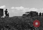 Image of L-5B planes Okinawa Ryukyu Islands, 1945, second 7 stock footage video 65675052270