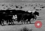 Image of cowboys United States USA, 1968, second 11 stock footage video 65675052587