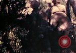Image of 1st and 2nd Marine Battalions Okinawa Ryukyu Islands, 1945, second 6 stock footage video 65675052760