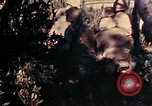 Image of 1st and 2nd Marine Battalions Okinawa Ryukyu Islands, 1945, second 7 stock footage video 65675052760
