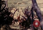 Image of 1st and 2nd Marine Battalions Okinawa Ryukyu Islands, 1945, second 10 stock footage video 65675052760